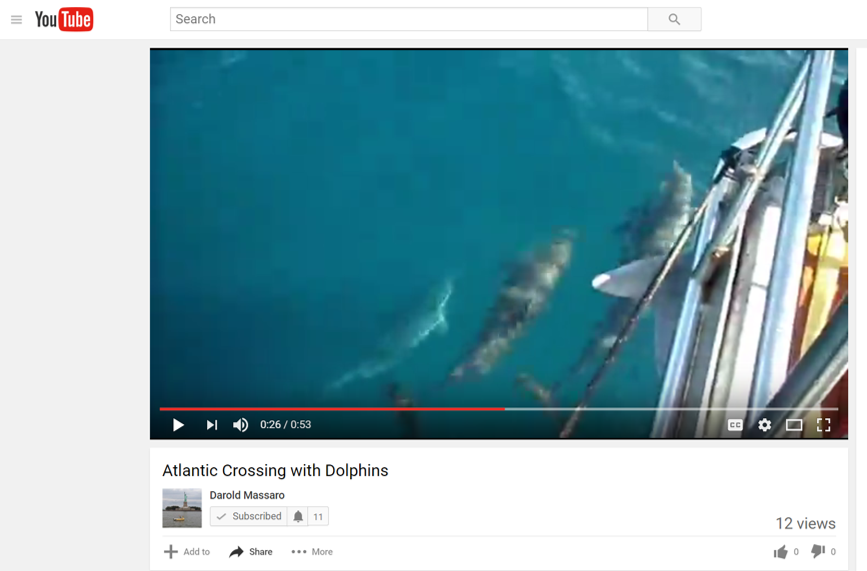 Dolphins in the middle of the Atlantic! (Video)